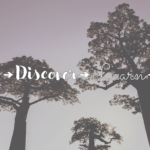 Grove of Baobab trees with text explore, discover, learn, share
