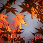 Close up of autumn leaves on trees